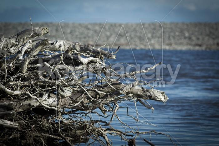 Driftwood Photo #55912