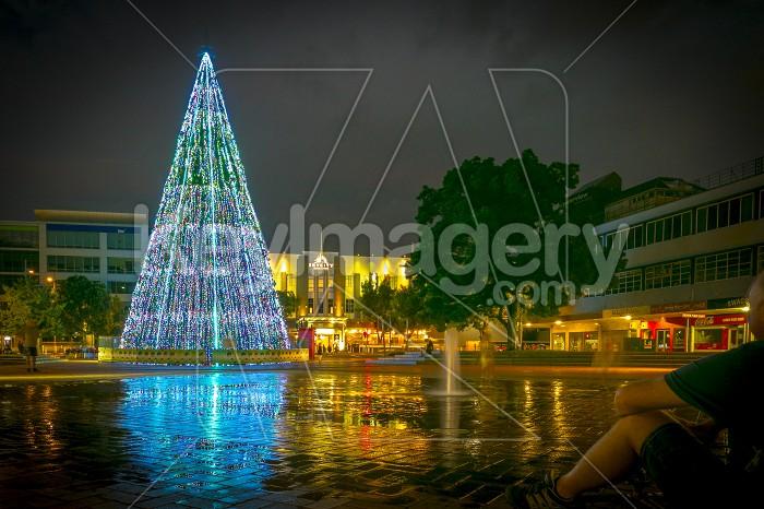 Hamilton Christmas Tree Photo #56129