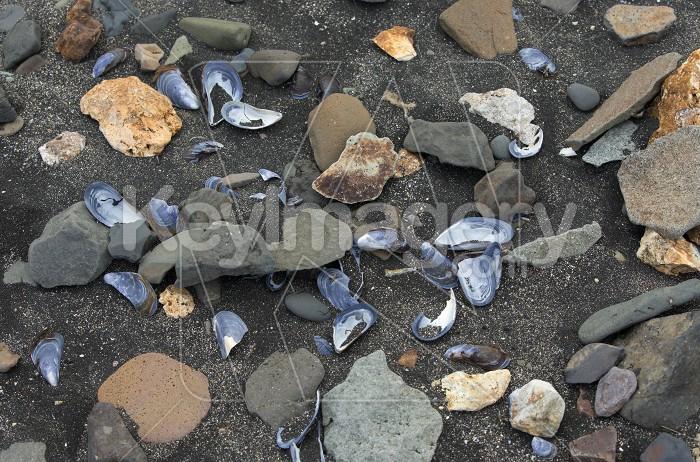 Seashore of the Atlantic ocean Photo #57125