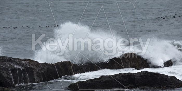Seashore of the Atlantic Ocean Photo #57126