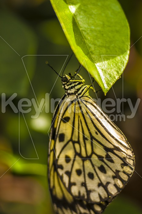 Butterfly Photo #55048