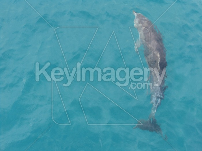 A dolphin swimming in the water Photo #624