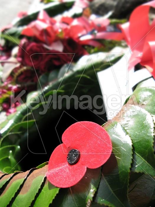 A red poppy Photo #1483