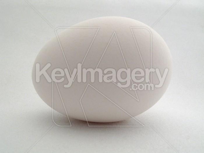 A single egg Photo #2602