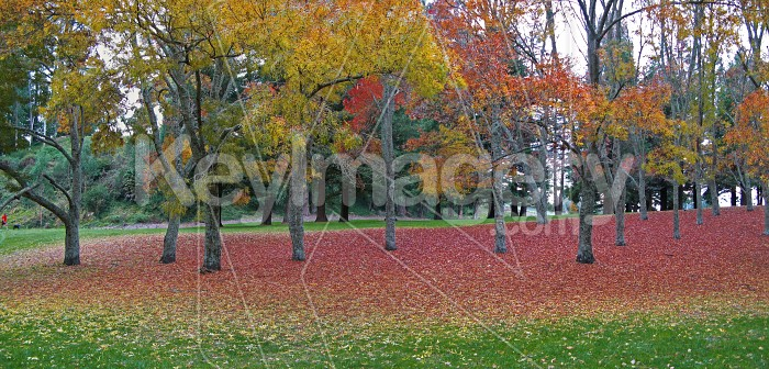 Autumn leaves falling off the trees Photo #1781