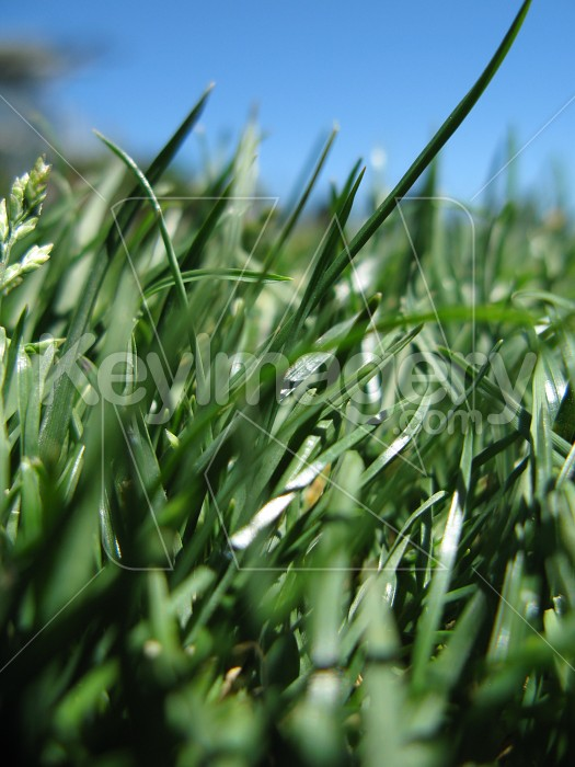 Deeper down in the grass roots Photo #6534