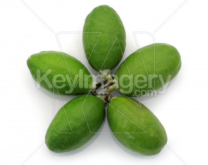 Fresh Feijoa Fruit Photo #1172