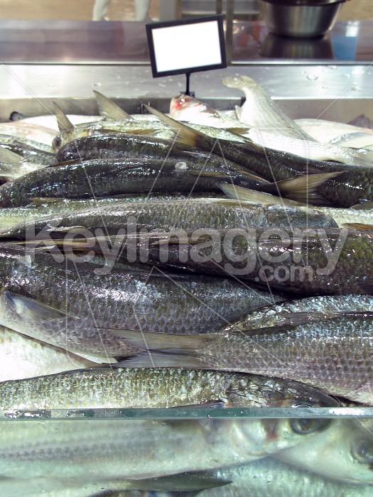 Fresh fish for sale Photo #2057