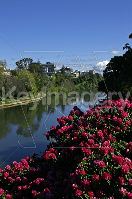 Hamilton City and Waikato River Photo #4346