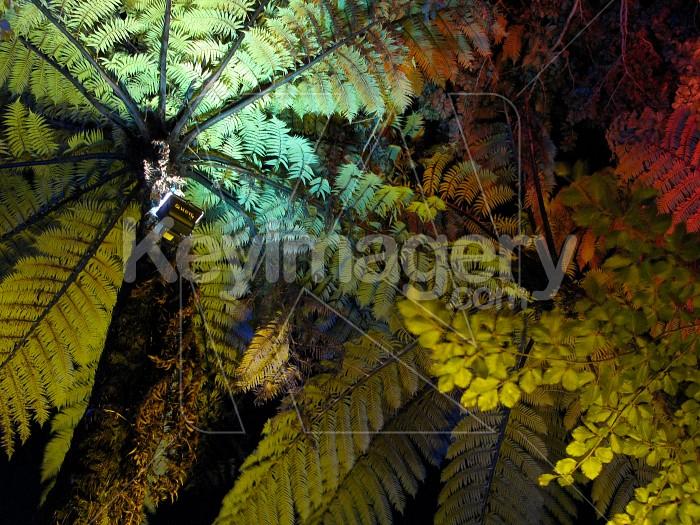 Illuminated ferns and trees Photo #6553