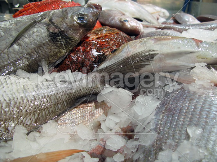 More assorted fish for sale Photo #2049