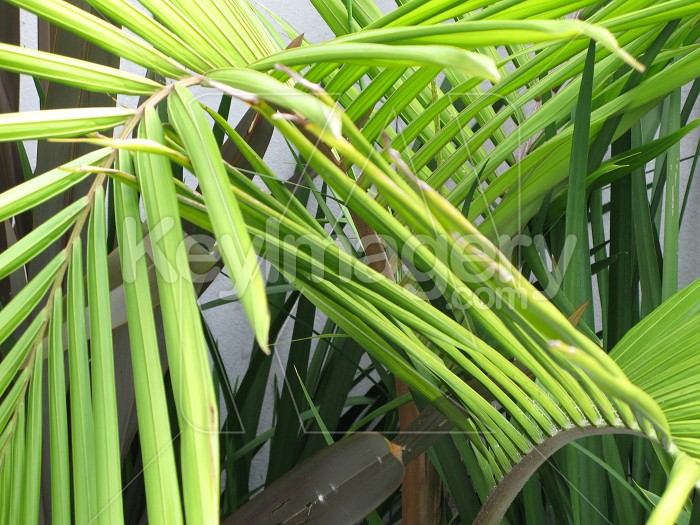 Palm fronds in a garden Photo #2073