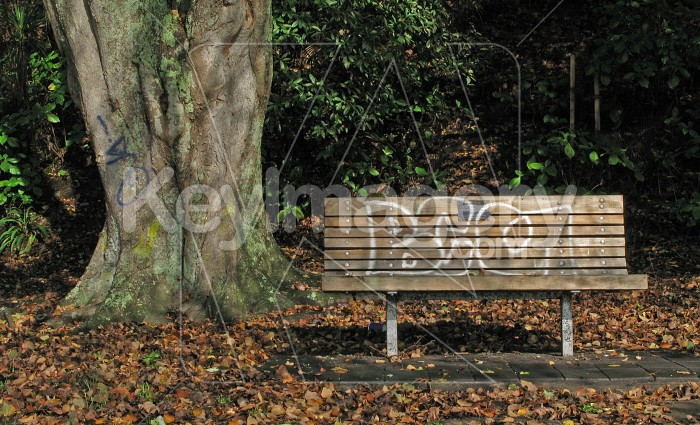 Park bench and tree with graffitti Photo #1983