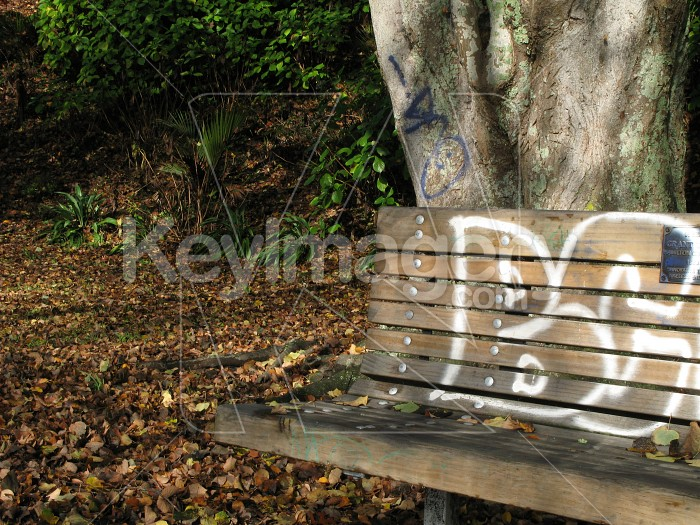 Park bench and tree with graffitti Photo #1985