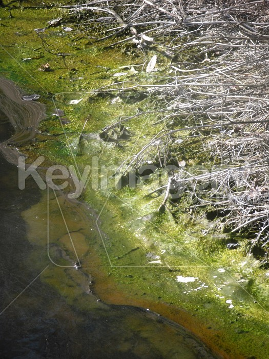 Polluted swamp Photo #1498
