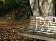 Park bench and tree with graffitti