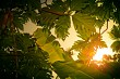 Warm Sun Through the Trees