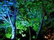 Blue and green illuminated trees