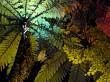 Illuminated ferns and trees