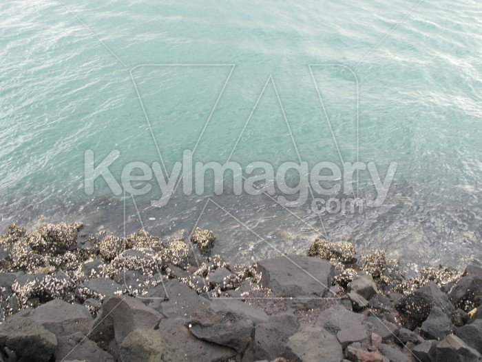 The rocky coastline Photo #2126