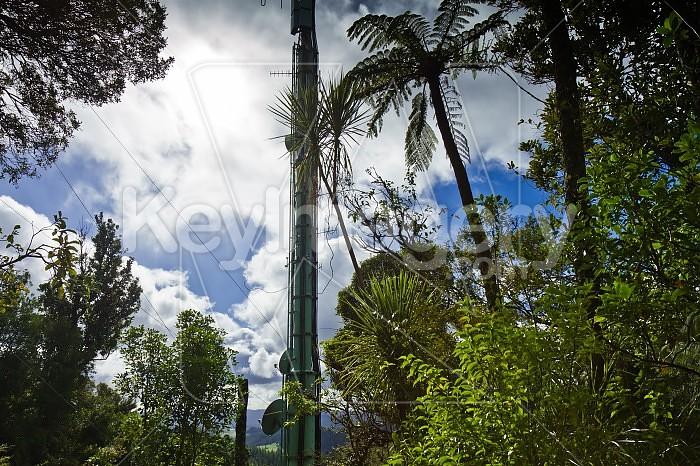 Transmitter Tower on Mt Parihaka, Whangarei Photo #41807