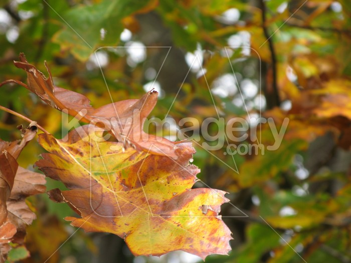 Various coloured Autumn leaves Photo #1496