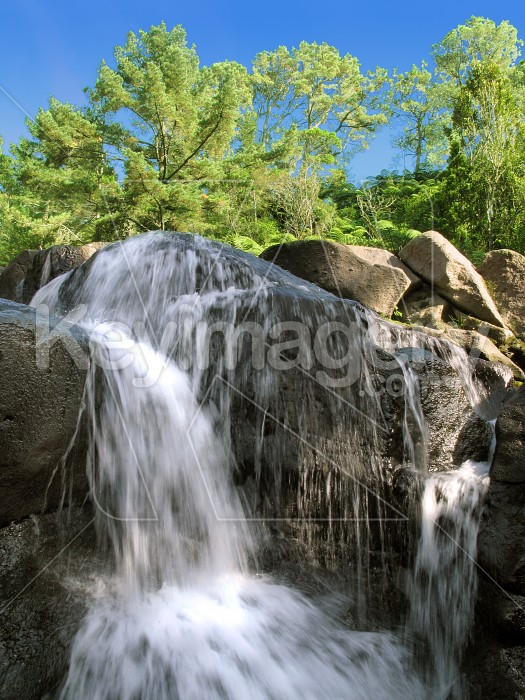 Waterfall at McLaren Falls, Tauranga Photo #434
