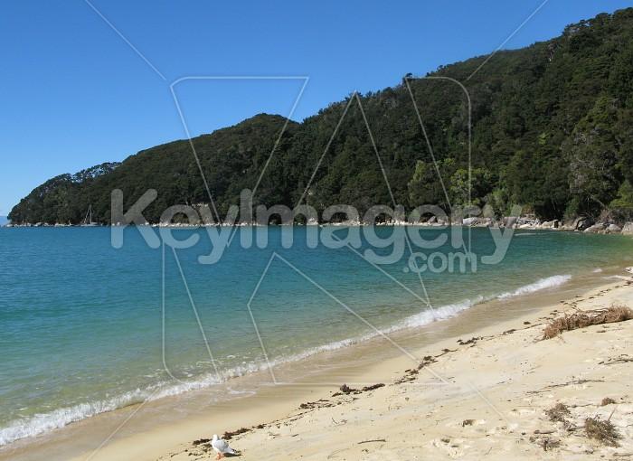 Sunny days at the beach Photo #12098