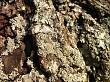 Lichen & Tree Bark
