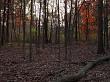 Woods In Autumn