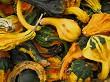 Autumn Squash Harvest