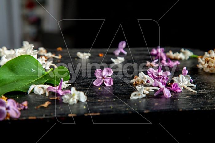 Fallen lilac flowers and leaf on the table Photo #61937