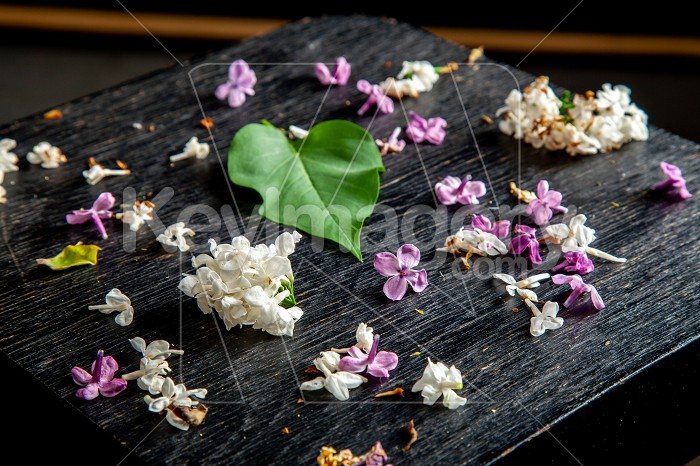 Fallen lilac flowers and leaf on the table Photo #61938