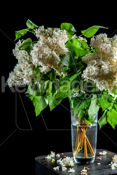 Lilac in vase on the black background Photo #61929