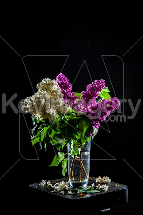 Lilac in vase on the black background Photo #61933