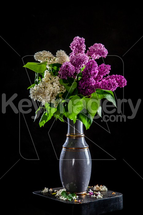 Lilac in vase on the black background Photo #61935