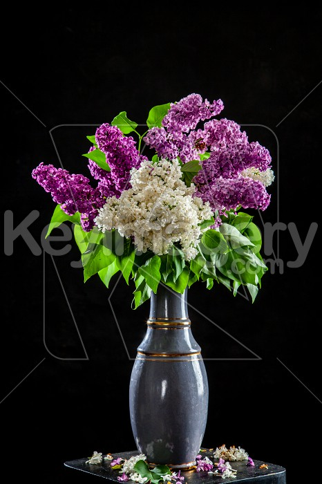 Lilac in vase on the black background Photo #61936