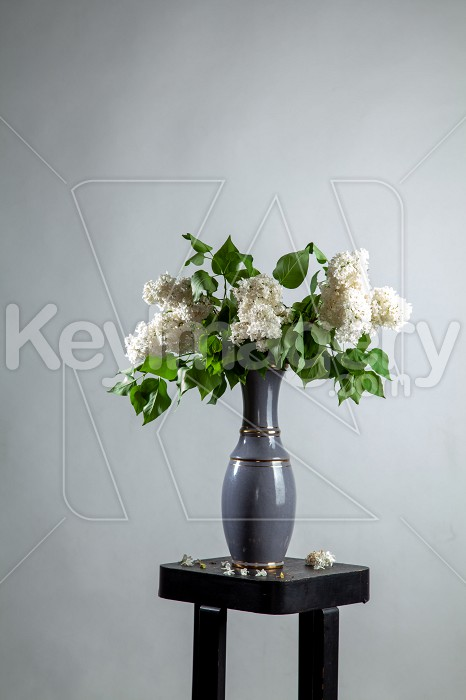 Lilac in vase on the gray background Photo #61922