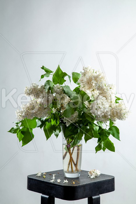 Lilac in vase on the gray background Photo #61923