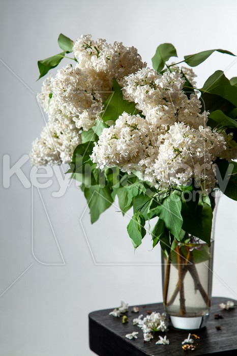 Lilac in vase on the gray background Photo #61927