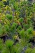 Spruce tree plants.