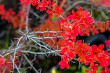 Branch with red leaves