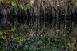 Grass reflection in water as background.