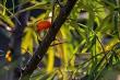 Green bush with orange buckthorn.