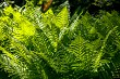 Green fern leaves as background.