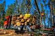 Crane loading logs in the truck.