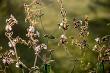 Wild rural flowers on green field.