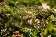 Dew drops on spider web in forest.
