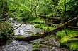 Forest with river, fallen tree and bridge.