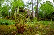 Ferns and ruins of old mill